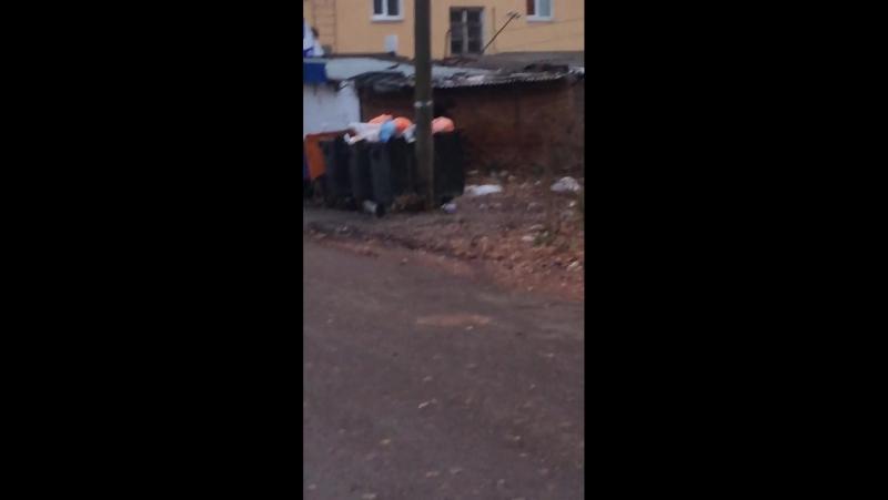 Куда смотрит администрация города? Бродячие собаки на улице Ленина