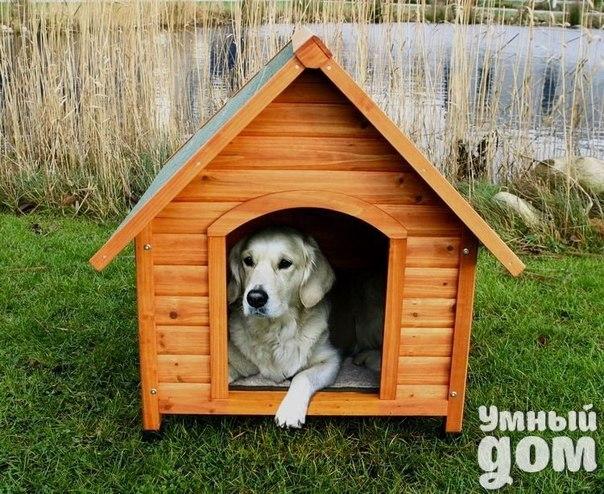 Тёплая будка для собаки своими руками, чертёж и сборка. Сделать будку для собаки своими руками непросто, но вполне возможно. Тёплая собачья будка – это прямоугольная конструкция с плоской крышей и утеплёнными стенами, состоящая из спального места и тамбура. Какие материалы подойдут для строительства собачьей будки своими руками 1.Каркас – сосновые бруски 50x50 или 40x40 миллиметров, а также 50x25 (40x25) миллиметров; 2.Наружная обшивка – либо деревянная вагонка (рекомендуется), либо…