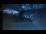 дельфин убивает акулу