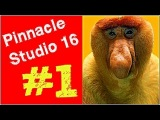 Pinnacle Studio 16 , 17 Урок1 обзор Редактирование файла Мысля от Эдгара