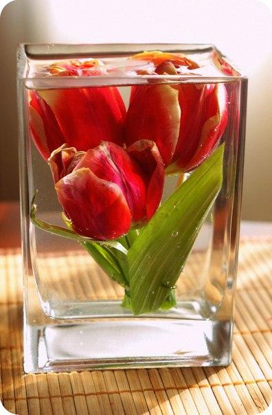 Цветы в глицерине купить в перми подарок коллеге юбилей женщине 55 лет