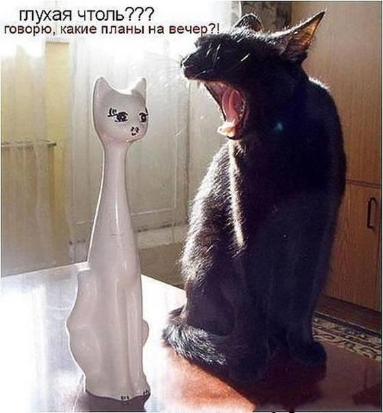 приколы с котами видео смотреть бесплатно