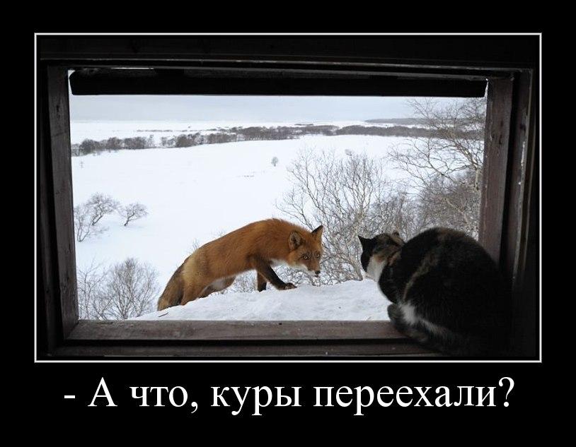 Все больше бурый волк слушать смотреть рассказ джек говорил медленно так