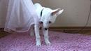 Догтренинг 83 Как вырастить правильную собаку