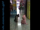 кот Чака Норриса