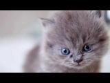 Наверное самое милое видео про котят