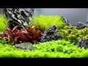 Scaper`s Tank 50L 5 Week´s later