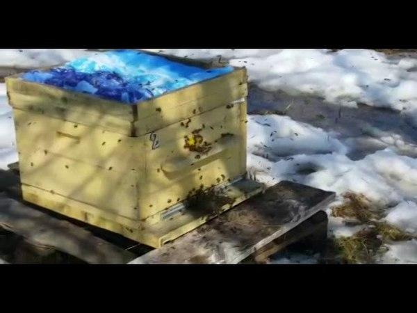 2018 г. Выставляем пчёл из зимовника. Очистительный облёт.