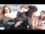 Lapa - Your social lost & found