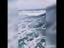 Одинокие люди живут у моря Black Cattaleya