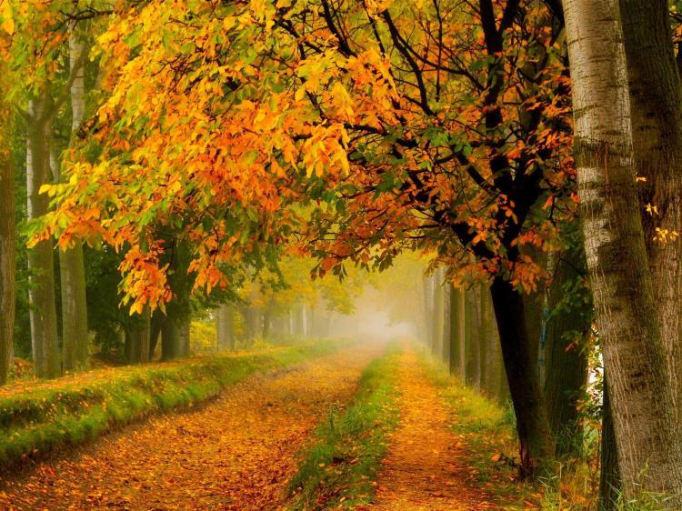 Autumn time ... - Pagina 2 PCnZ1Bbq09s