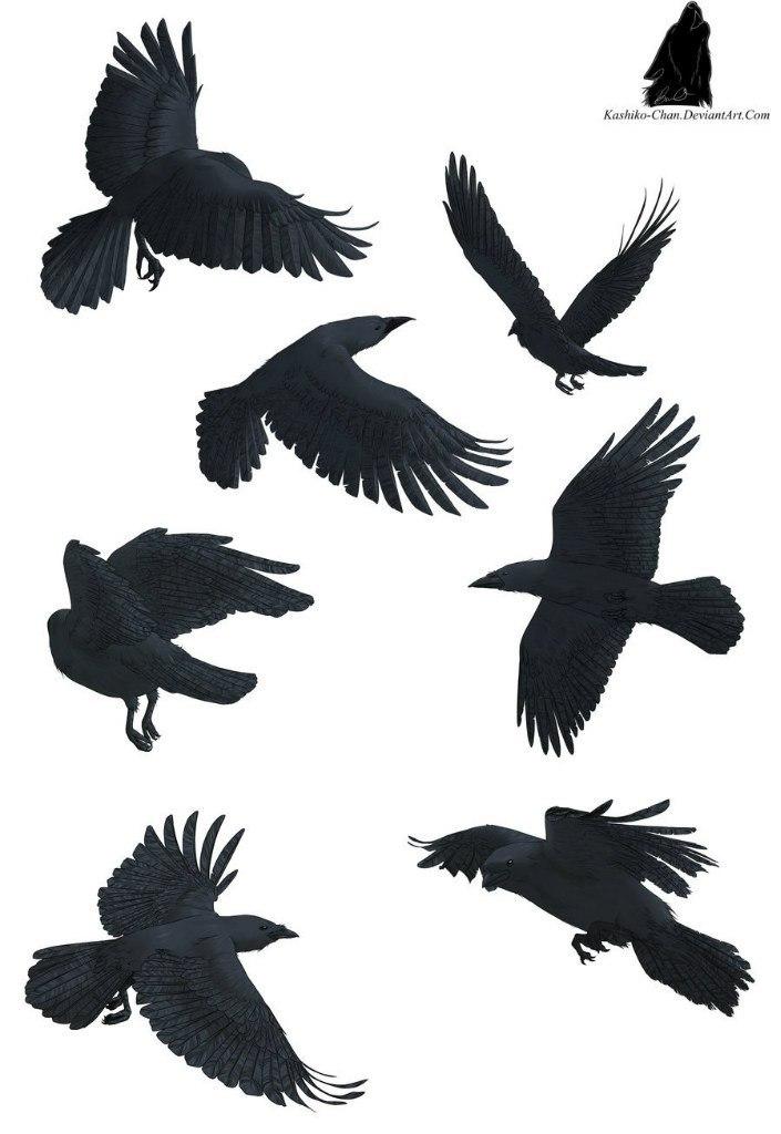 вороны в полёте с разных