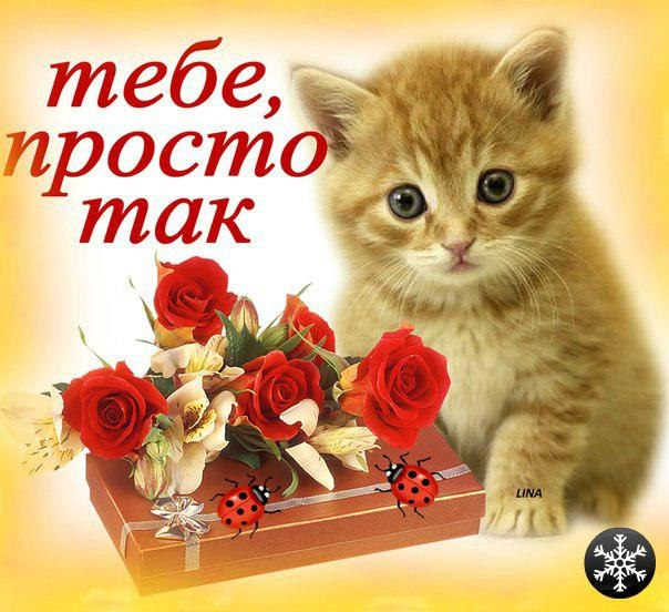 ... картинки и открытки vk.com/fotomimi: vk.com/id205131770