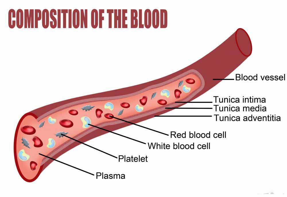 Диаграмма, показывающая состав крови.