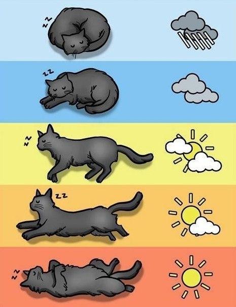 Прогноз кошачьей погоды на сегодня!!!