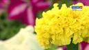Цветы однолетники чем украсить свой сад