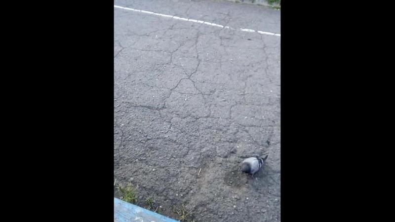 кормили голубей