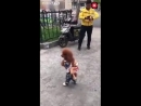 Собака друг человека.