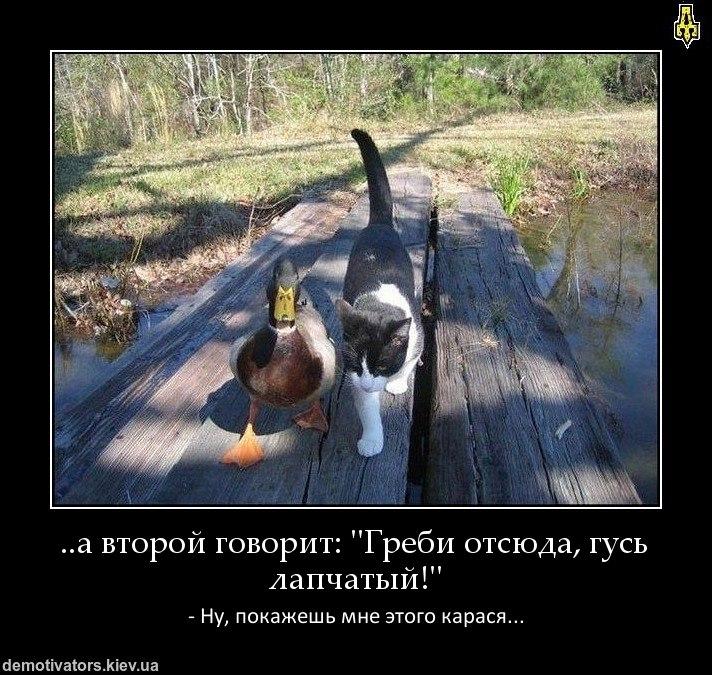 Мне скачать абоде фотошоп на русском нему