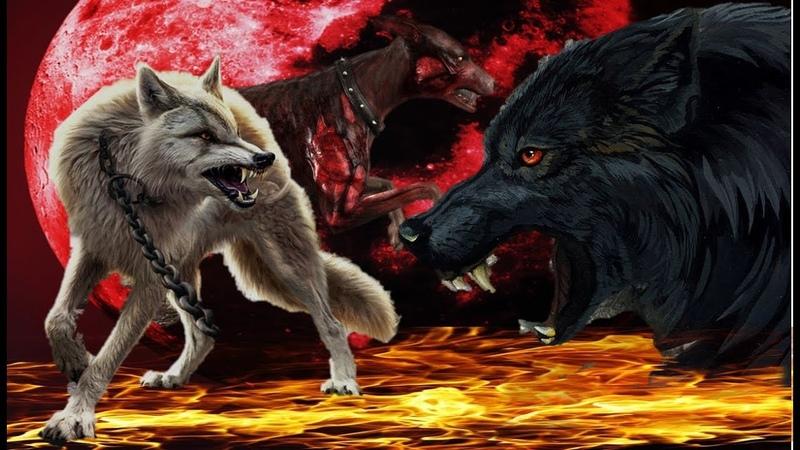Волки Демоны Собаки Зомби Клип Над Вами