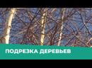 Зеленый участок. Подрезка деревьев во дворе