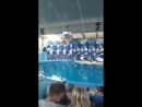 сочи дельфины