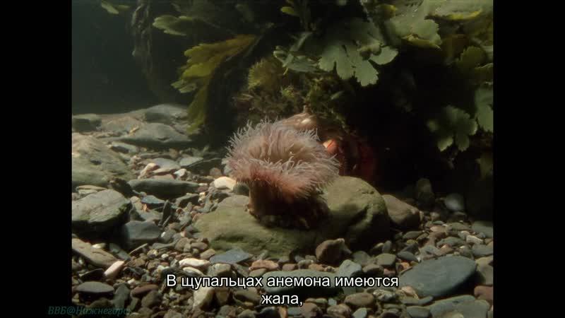 BBC Уроки выживания 07 Жизнь вместе Познавательный природа животные 1990
