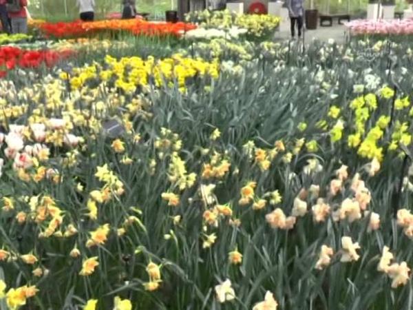 Dünyanın en büyük çiçek bahçesi görenleri büyülüyor