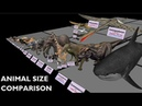Animal Size Comparison 3D