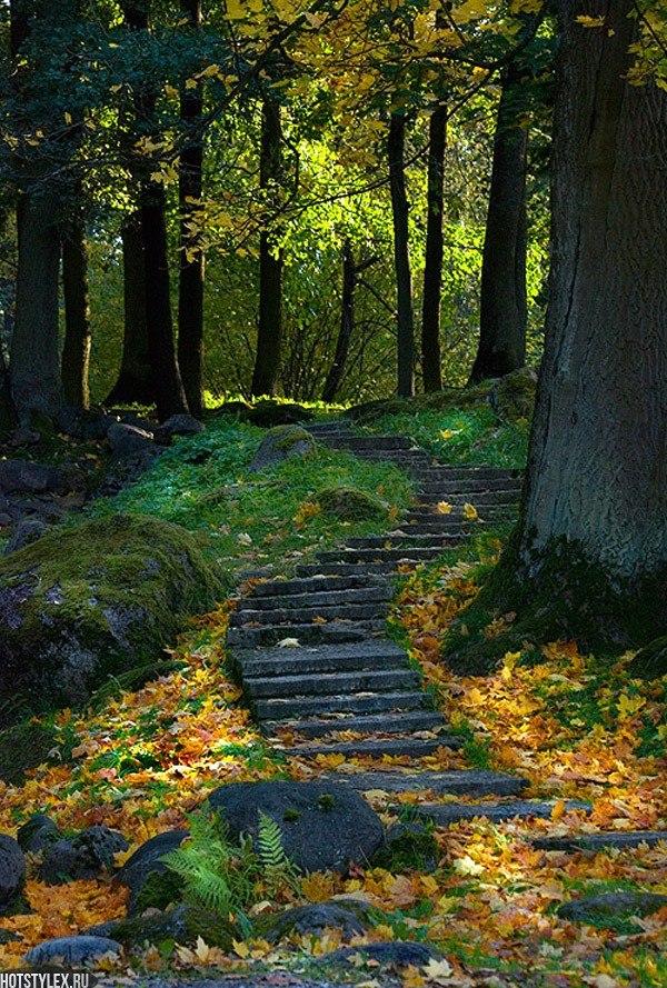 фото сказочный лес: hotstylex.ru/stilnye-foto/raznye-podborki/2586-foto-skazochnyj-les