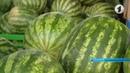 В республике растет количество пищевых отравлений