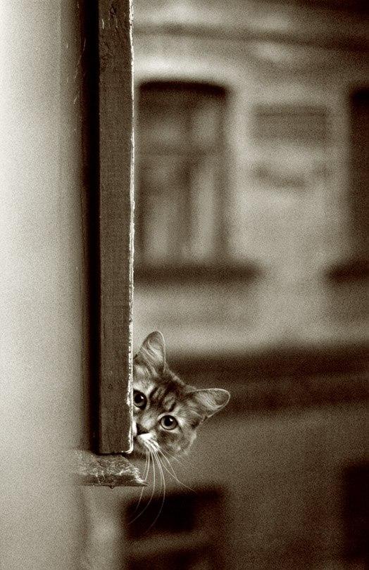 Из-за котят остановили метро на 1,5 часа - Цензор.НЕТ 3545