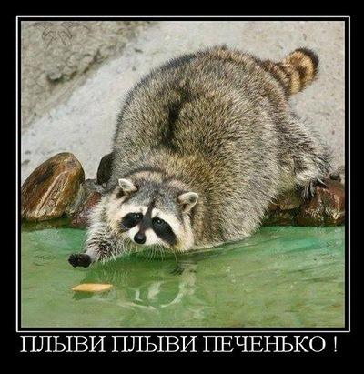 Саша Гринченко, 21 мая , Жмеринка, id212648141