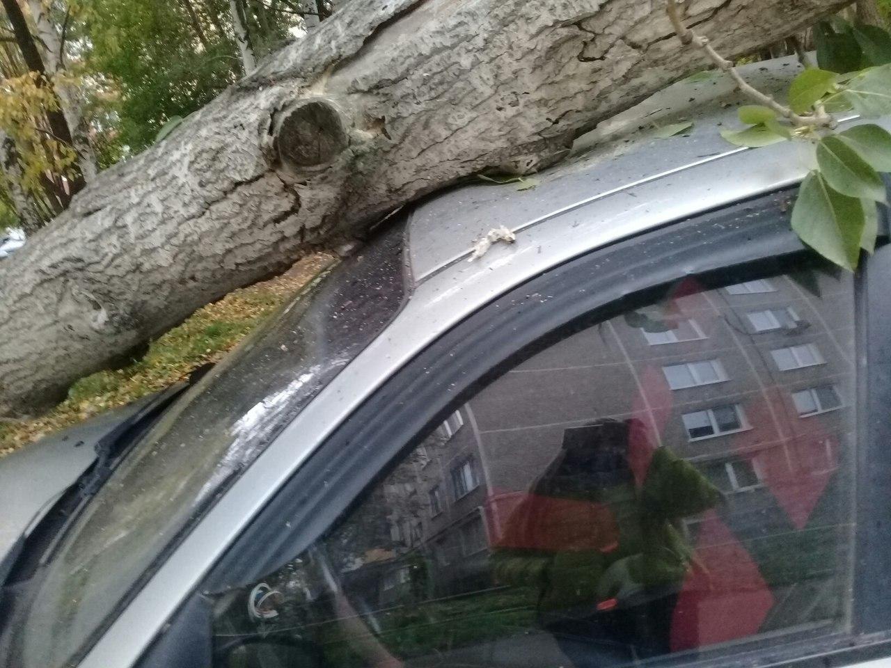 В Перми на припаркованную у дома иномарку упало дерево