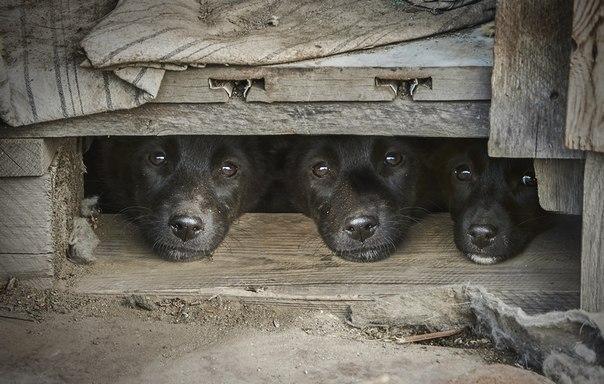 «Из жизни бездомных собак». Автор фото — Олег Богданов: nat-geo.ru/photo/user/163766/