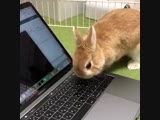 bunnies! - he wants to help! 💻