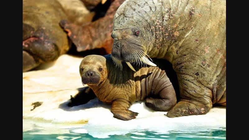 Ополаскываемся Осаново источник здоровья моржи тула рязань москва зож зима природа баня моржи отзывайтесь