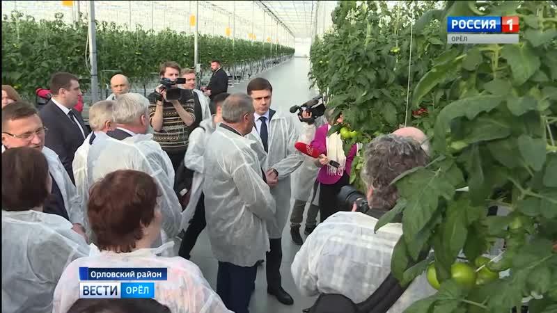 В новом тепличном комплексе в Орловском районе собрали первый урожай огурцов