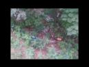 Лыткарино лес