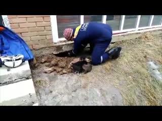 В Иркутске сотрудники МЧС прокопали 20-метровый тоннель, чтобы спасти десять щеночков
