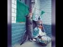 Прикольный кот ест рыбу