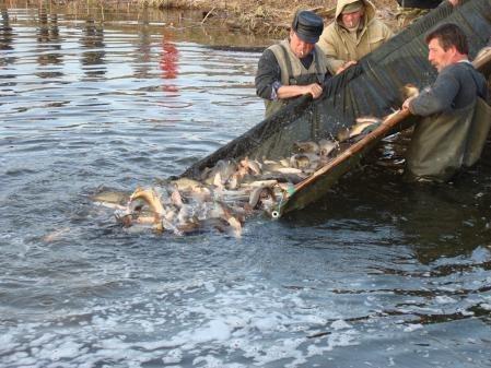 """В """"Юго-Запад транснефтепродукт"""" прошла первая в этом году акция по пополнению рыбных ресурсов Волги"""