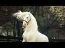 Там, где рассвет / конный спорт / клип про лошадей