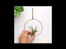 Лайф-хак для воздушных растений