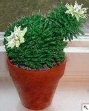 свой цитатник или сообщество! смотрите,какая красота! кактусы из бисера!  Прочитать целикомВ.