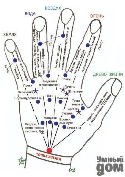 Важные точки на руках Самомассаж кистей рук принесет много пользы - он оказывает благотворное влияние на работу внутренних органов. Так, массаж большого пальца стимулирует деятельность головного мозга и тонизирующее действуют на весь организм. Массаж указательного пальца способствует хорошей работе желудка, среднего - кишечника, а безымянного - печени. Мизинец связан с сердцем, поэтому тибетские целители советуют покусывать его ноготь при сердечном приступе. Этот несложный массаж нужно делать…