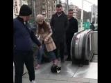 Хули нам, котам  [MDK DAGESTAN]