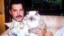 Freddie Mercury And His Phenomenal Love For Cats