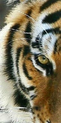 Предводитель Тигров, 31 декабря , Сибай, id190788630