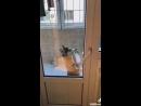 ржака пес собака танцы за дверью орать тут